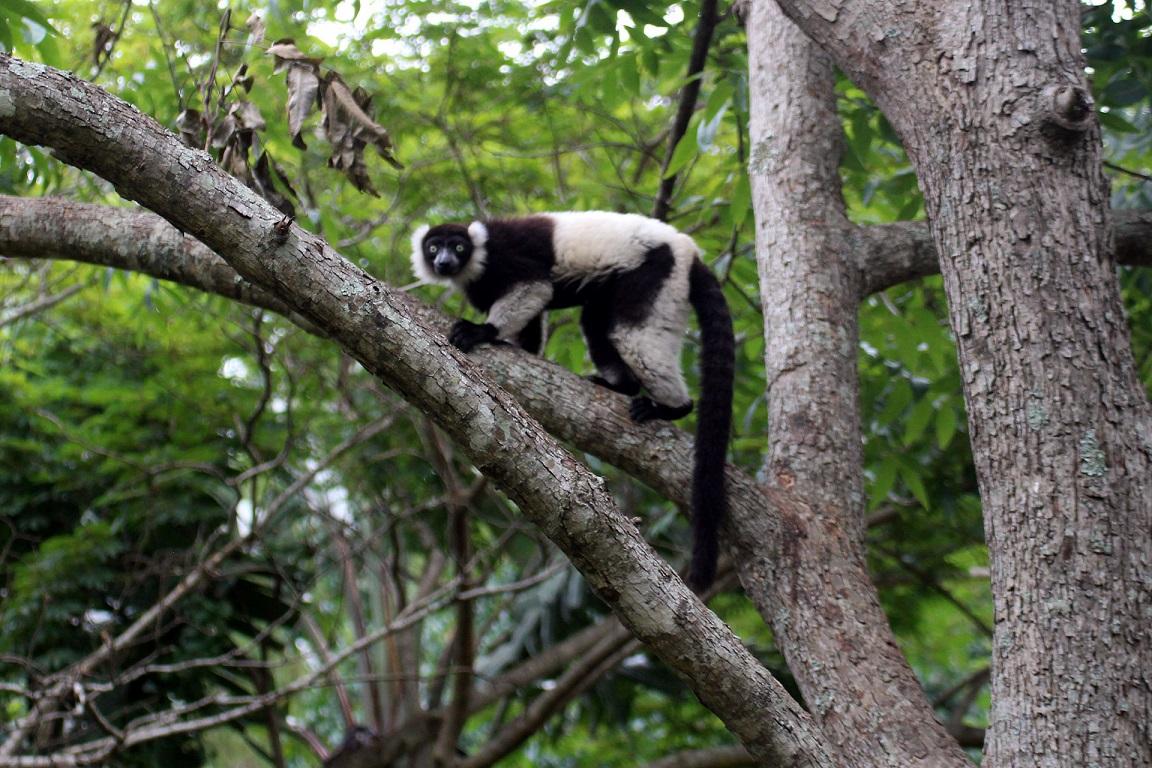 monkeyland.4