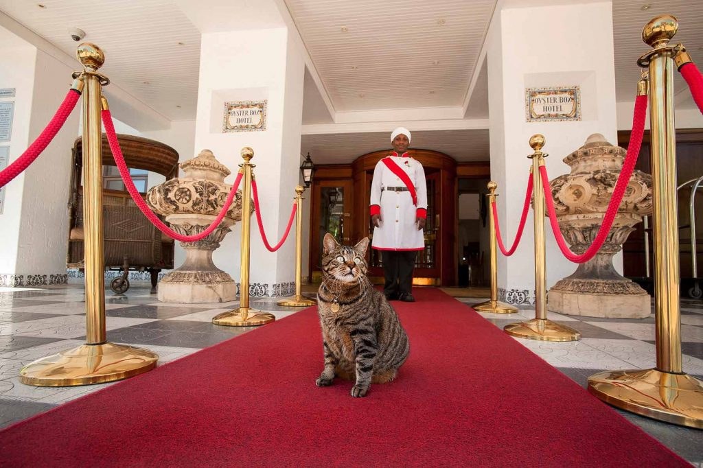 PURR-FECT: Skabenga, the resident celebrity cat takes up his position on the red carpet.