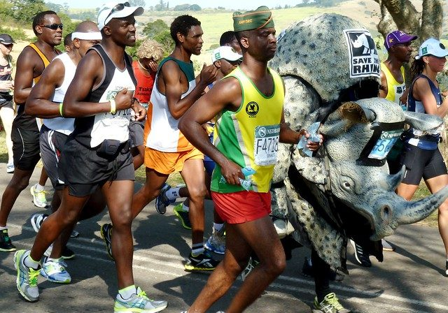 "Rhino costume runner in the Comrades UltramarathonVincent (Vinny) O'Neill, the ""fastest marathon rhino costume runner"", is seen here at the 50 km mark in the Comrades ultra-marathon. He completed the run in the 8 kg costume to raise awareness about rhino poaching.The Comrades Marathon is an ultramarathon of approximately 89 km which is run annually in the KwaZulu-Natal Province of South Africa between the cities of Durban and Pietermaritzburg. It is the world's largest and oldest ultramarathon race.Photo credit: JMK via Wikimedia Commonscommons.wikimedia.org/wiki/File:Vincent_O%27Neill,_2013_C..."